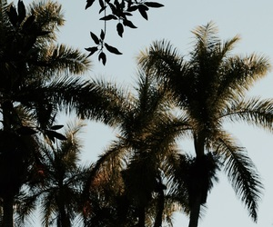 away, palm, and winter image