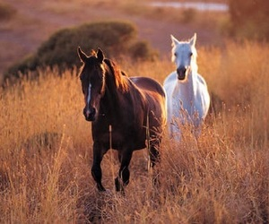 animal, horse, and bestie image