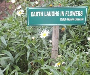 aesthetic, earth, and flowers image