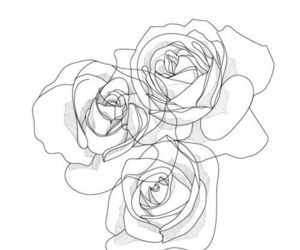 flowers, illustration, and rose image