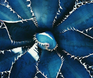 tropical, blue, and cactus image