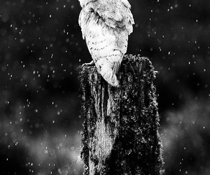 amazing, black&white, and forest image