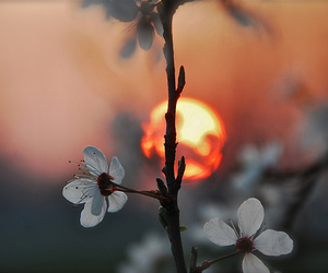 flowers, sun, and sunset image