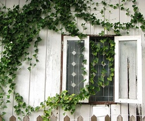 window, green, and plants image