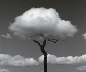 arbre and nuage image