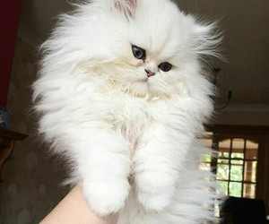 cats, cute, and lovely image