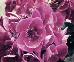beautiful, violet, and flowers image