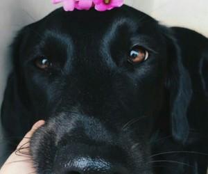 cachorros image