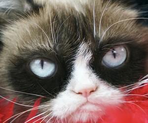 animals, baby, and baby cat image