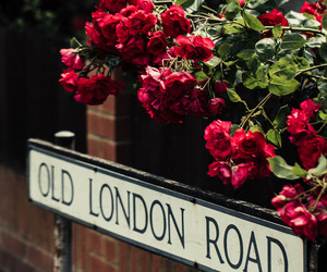 flowers, london, and roses image