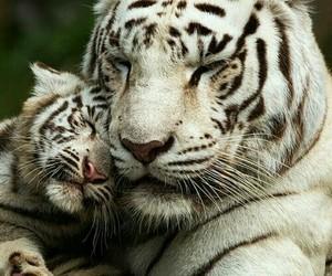 amor, familia, and love image