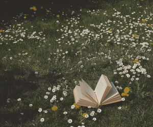 daisies and reading image