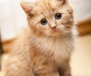 baby, fluffy, and cute image