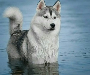 lobo, nature, and water image