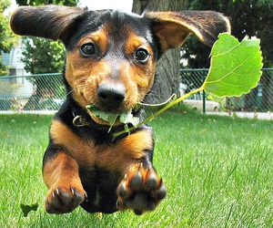 cute, dog, and leaves image
