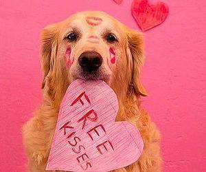 dog, kiss, and heart image