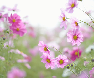 flower, japan, and nature image