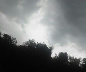 dark, gray, and forest image