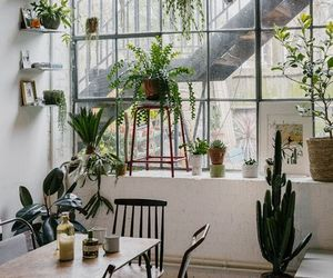 home, plants, and design image