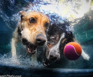 dog, ball, and water image