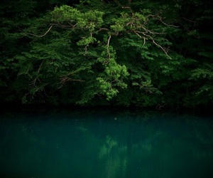 escape, green, and nature image