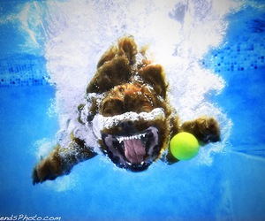 dogs, funny, and underwater image