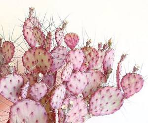cactus, pink, and plants image