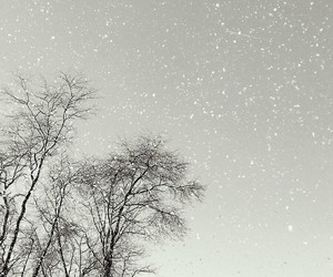 black and white, cold, and snow image
