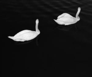 Swan, ariana grande, and adore image