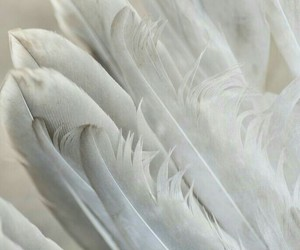 feathers and white image
