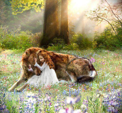 twilight, wolf, and jacob image