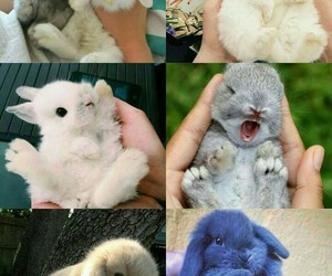 cute, animals, and bunny image