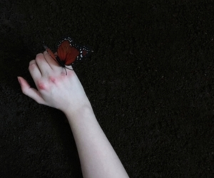 art, butterfly, and hand image