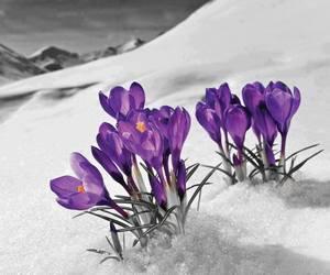 flowers, purple, and snow image