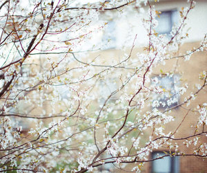 floral, flowers, and spring image