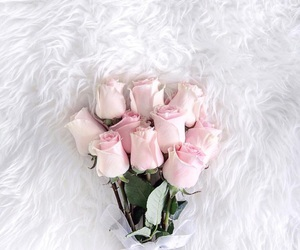 classy, pink, and rose image