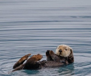 photography and sea otters image