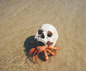 crab, skull, and beach image