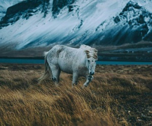 horse, iceland, and mountain image