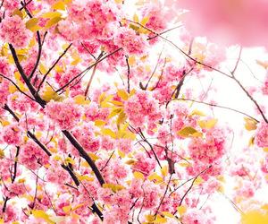 sakura, beauty, and flowers image