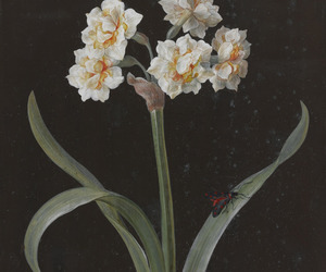 flowers and painting image