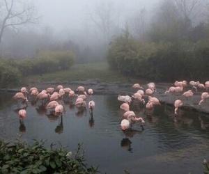 flamingo, pink, and theme image