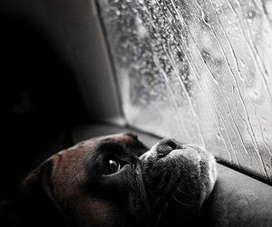 dog, rain, and puppy image