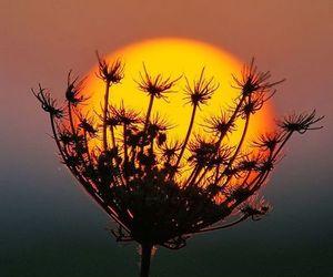 sun, nature, and tumblr image