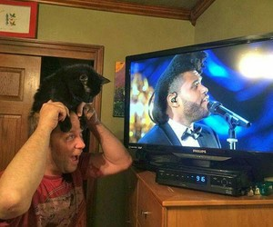 cat and the weeknd image