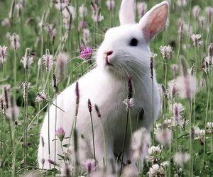 nature and rabbit image