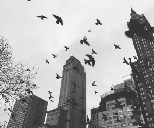 birds, new york, and black and white image