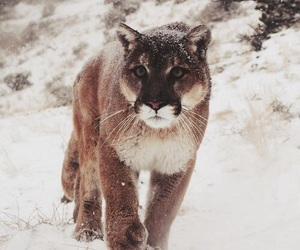 snow, animal, and nature image
