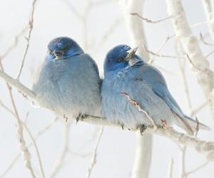 bird, blue, and winter image