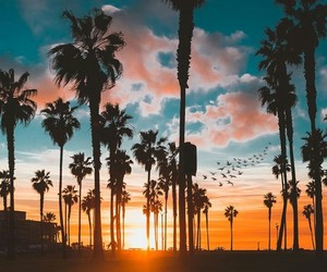 amazing, colors, and palm tree image